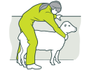 working-with-animals-sheep-hero-2.png